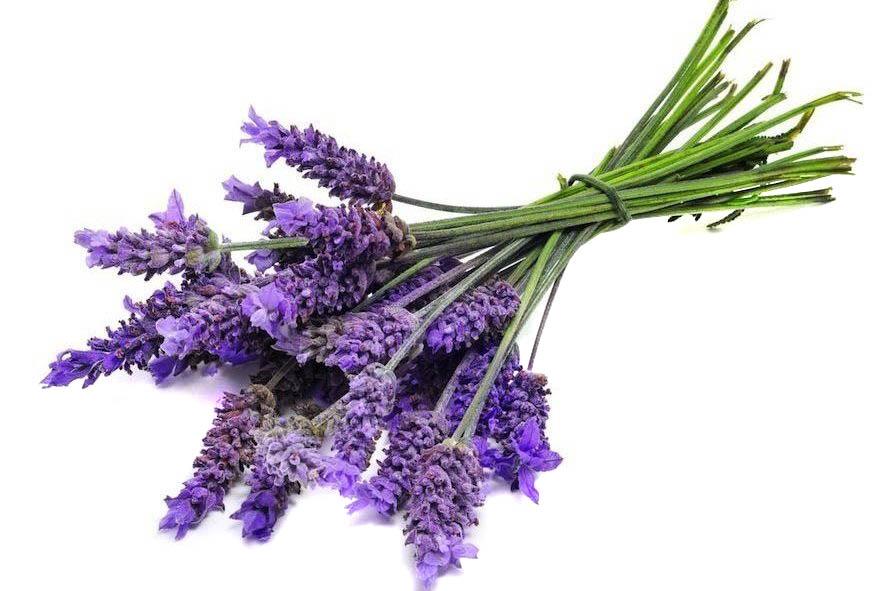 Botanicals. lavendel, Alles over gin.