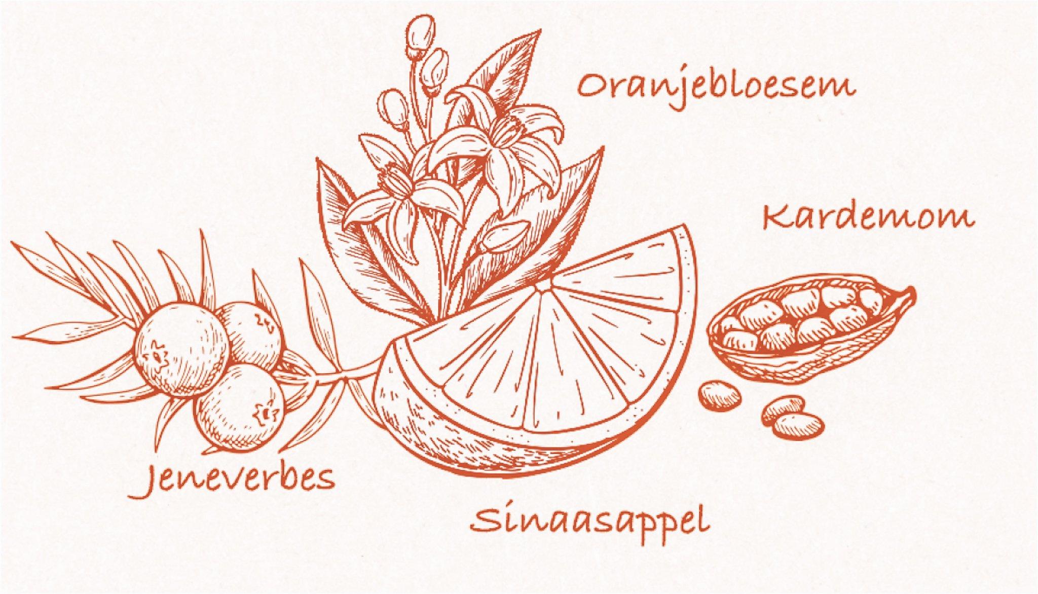Botanicals van Solar Gin, Alles over gin.