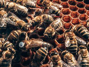 De bijen bij Stichting BeeSerious, Alles over gin.