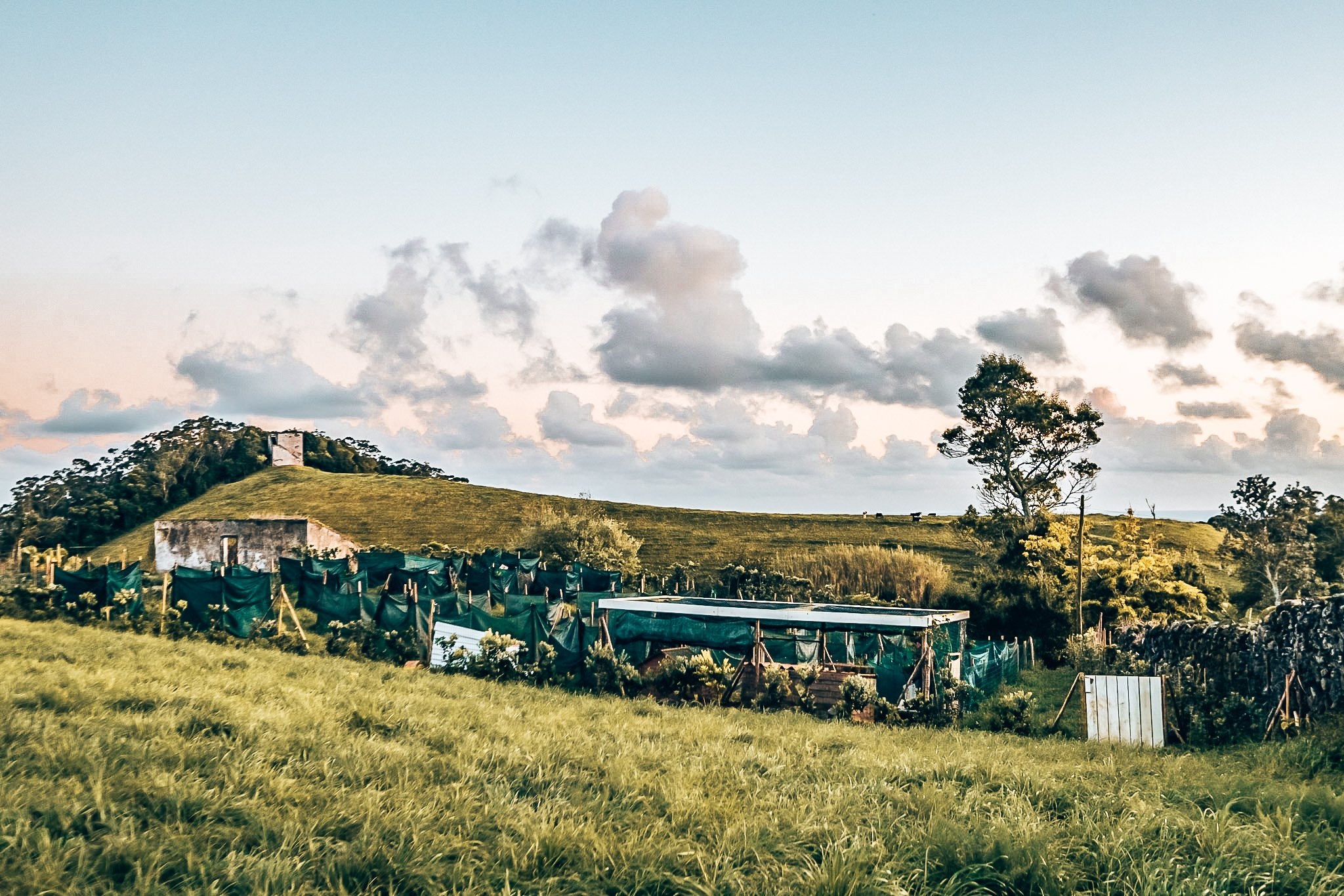 Van land tot bord bij Solar Branco Eco Estate, Azoren, Alles over gin.