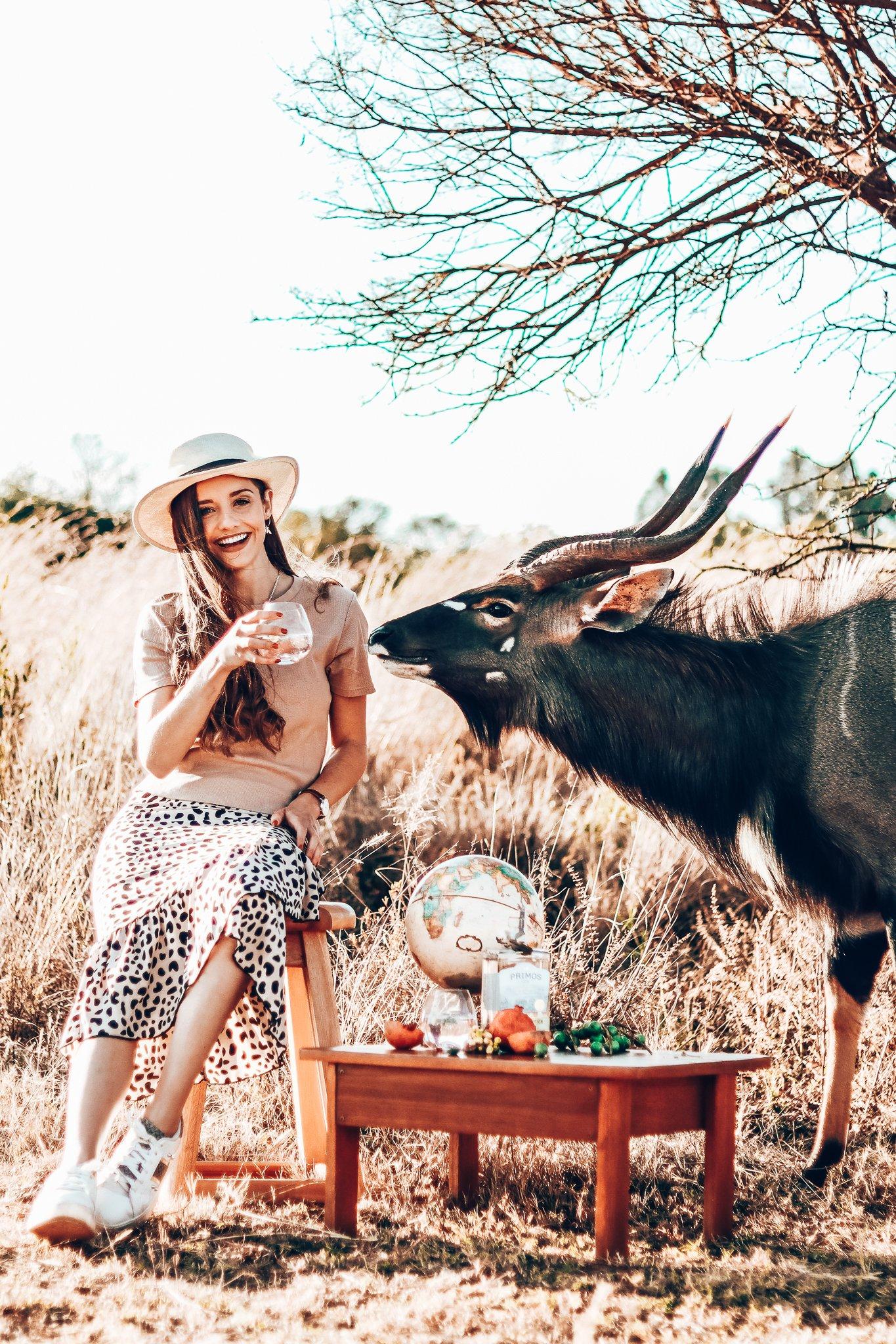Perfect serves van Primos Gin, Zuid-Afrika, Alles over gin.