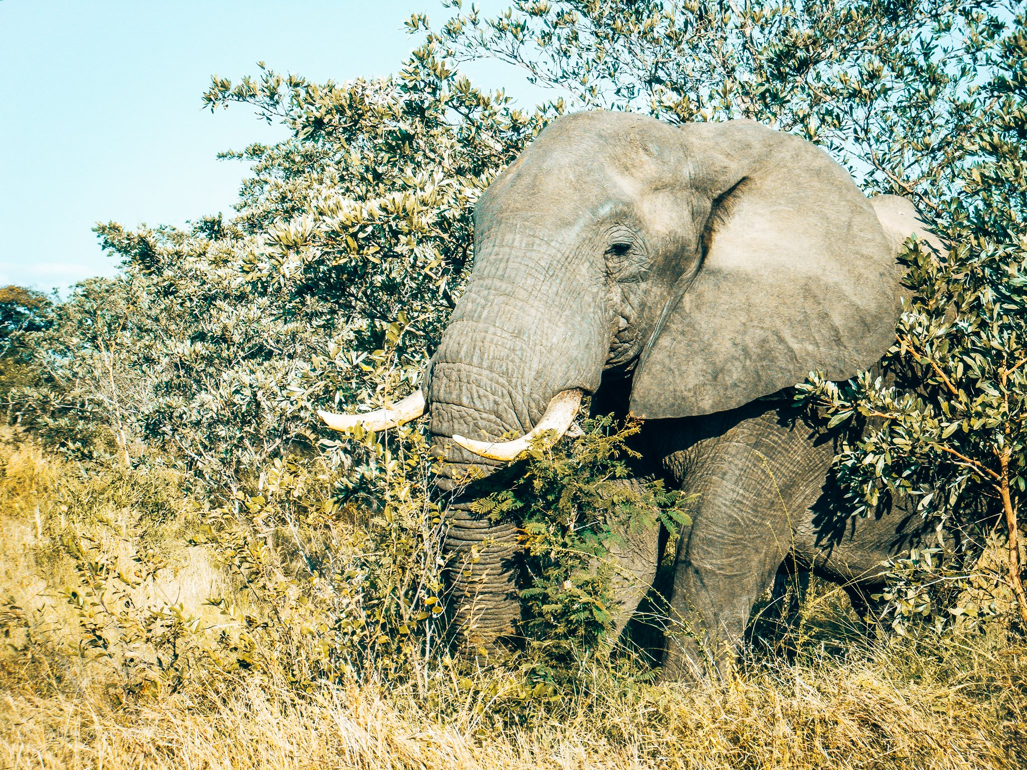 Support de olifanten door de aanschaf van Primos Gin, Alles over gin.