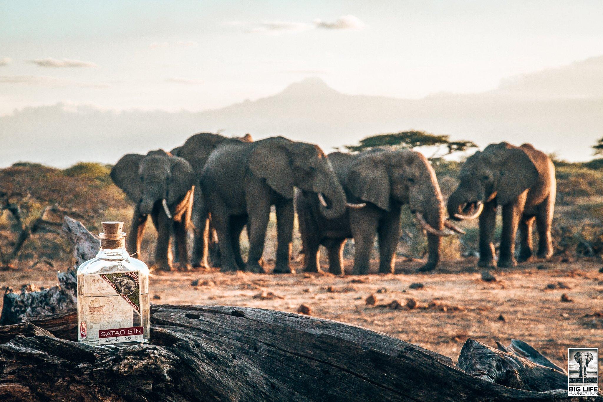 Satao Gin, Duitse gin met Afrikaanse roots, Alles over gin.
