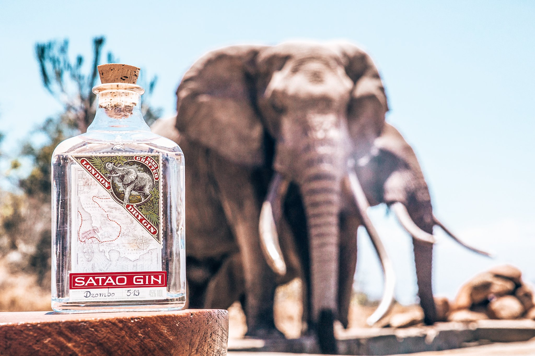 Satao Gin steunt de Afrikaanse olifant, Alles over gin.